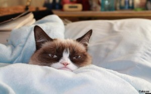 Funny Grumpy Cat Wallpaper Picture